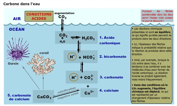 Acidification oceans
